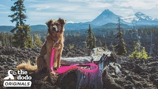 Rescue Dog Is So Excited To Go Kayaking With Her Mom l The Dodo Destination: Firsts by The Dodo
