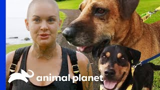 Amanda Takes 3 Adorable Rescue Dogs Out On A Field Trip   Amanda To The Rescue by Animal Planet