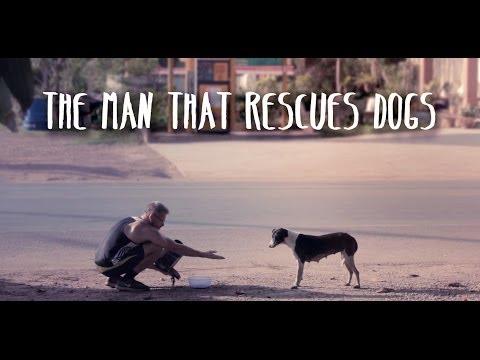 thailandia-accudisce-80-cani-randagi-perche-non-sopporta-di-vederli-soffrire