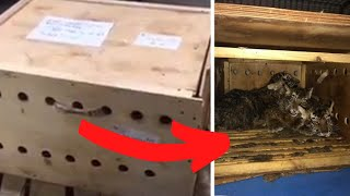 Airport Workers Open This Unmarked Box And Find Something Shocking by Did You Know Animals?