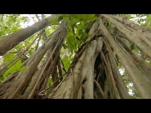 Pierde Veracruz gran parte de sus selvas