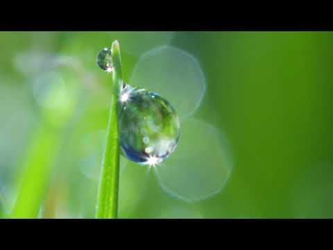 Adyashanti Video: The Essence of All Spiritual Teachings