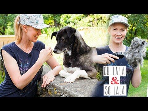 Hundepflege Trimmen DIY * Kurz - Haar - Frisur * runter mit dem Fell * So fühlt sich der Hund wohl