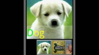 Animal Sounds & Ringtones YouTube video