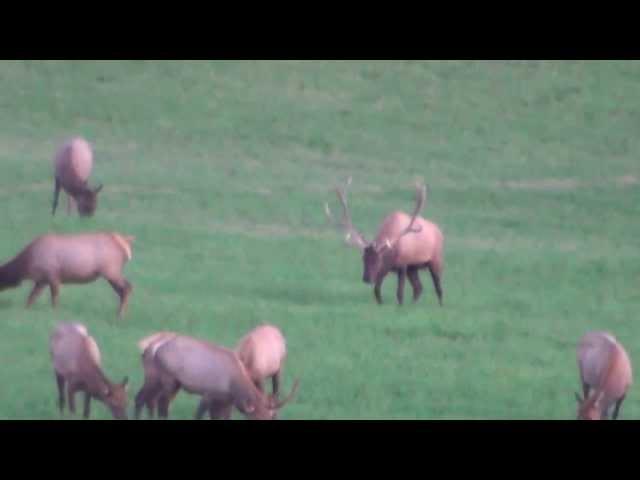 2013 Elk Video - 5