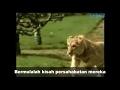 Viral kisah sedih singa dan tuannya dapat mengalirkan air mata