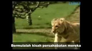 Video Viral kisah sedih singa dan tuannya dapat mengalirkan air mata MP3, 3GP, MP4, WEBM, AVI, FLV September 2018