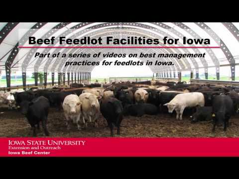 Managing Mud and Manure in Feedlots