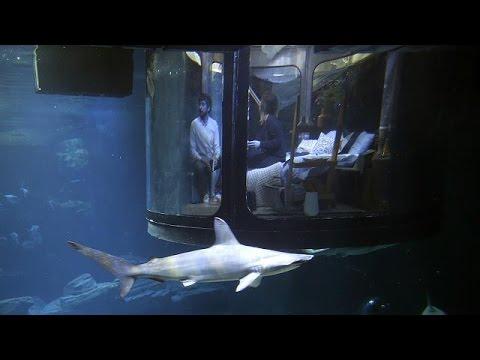 Παρίσι: Όνειρά γλυκά… δίπλα σε καρχαρίες