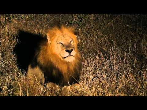 Africa's Super Seven - Part 3