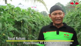 Video Bermodal Semangat Yusuf Nabani, Sukses Menjadi Petani Di Bogor MP3, 3GP, MP4, WEBM, AVI, FLV Desember 2018
