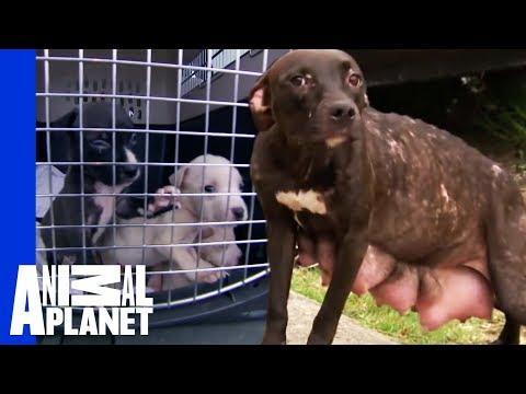 Video - Σκύλος φοράει την μασέλα ενός άνδρα και... χαμογελάει δείχνοντας τα καινούρια του δόντια!