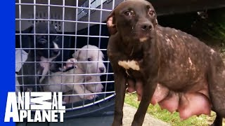 Download Youtube: Heartbreak and Euphoria for Mama Dog and Her Pups