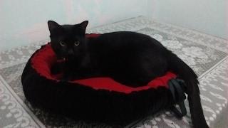 Cómo hacer una cama para mascotas