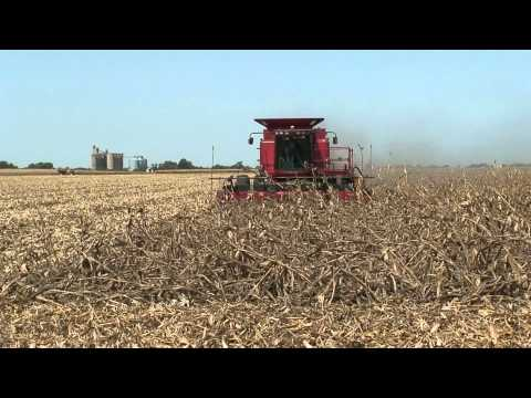 Combine Corn Reel In Down Corn Front View by Meteer Manufacturing