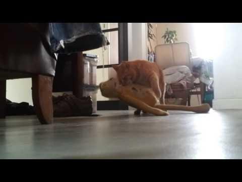 А что делает ваш кот, когда вас нет дома?