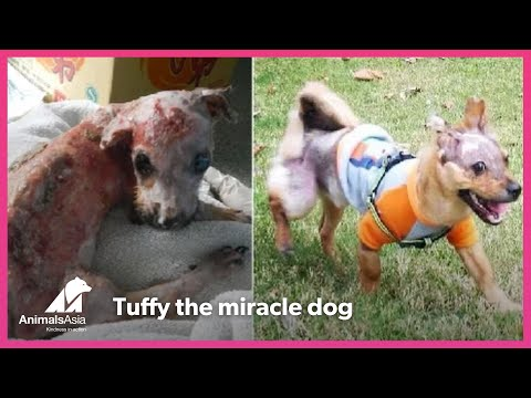 Tuffy, a dog who refused to be beaten by cruelty
