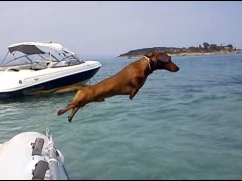 dogs at the holidays - Spithas, the Dachshund from Greece, is on vacation! After he wakes up he goes for a swim at the sea. Then he shows how smart he is by performing some funny t...