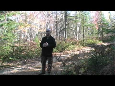 Conseils pour la chasse à l'orignal en octobre