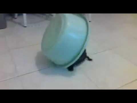 El escape de la tortuga... Fallido!