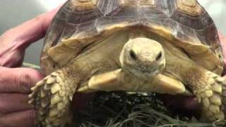 Dr. Pennea and Yemaya the Tortoise - Animal Medical Hospital, Charlotte
