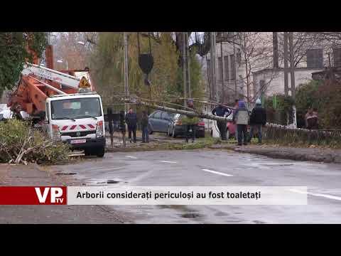 Arborii considerați periculoși au fost toaletați