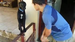 animale cainele cere iertare