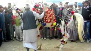 Hanumangarh India  city pictures gallery : DANCING MARWARI HORSE RUSH TV HANUMANGARH HORSE FAIR INDIA 2012