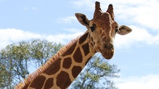 Alvin (TX) United States  City new picture : RayJ Reviews the Bayou Wildlife Zoo in Alvin, Texas
