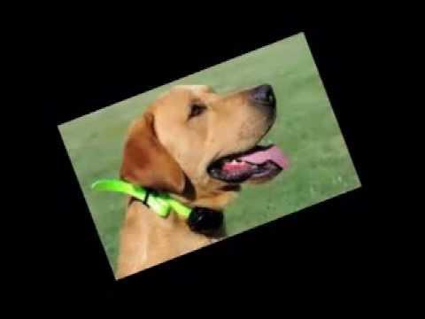 Dog training zone , dog training schools