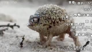 Video 【シロイルカ】カエルイルカ MP3, 3GP, MP4, WEBM, AVI, FLV Mei 2018