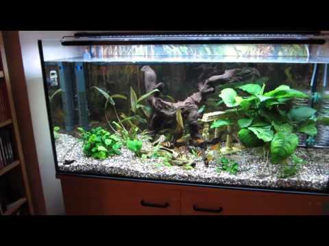 Aquarium LED Beleuchtung (Süßwasser)