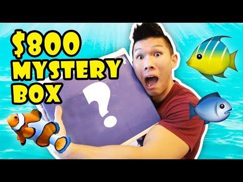 $800 FISHY MYSTERY BOX - Saltwater Aquarium || Life After College: Ep. 581_Akvárium. Heti legjobbak