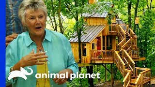 A Breathtaking Birdhouse Treehouse For Making The Most Of Retirement   Treehouse Masters by Animal Planet