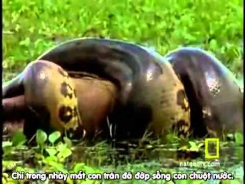 Tập tính săn mồi ở rắn [Lớp 11C3]