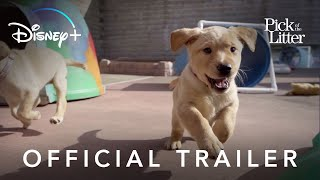 Pick of the Litter – Official Trailer | Disney+ | Streaming Dec. 20