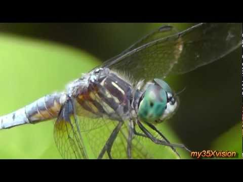 yt:stretch=16:9 - Summer Collage with Butterflies Dragonflies and friendly Spiders Filmed by my35Xvision in July of 2012 in Duke Island and Colonial Parks of NJ USA Relax with...