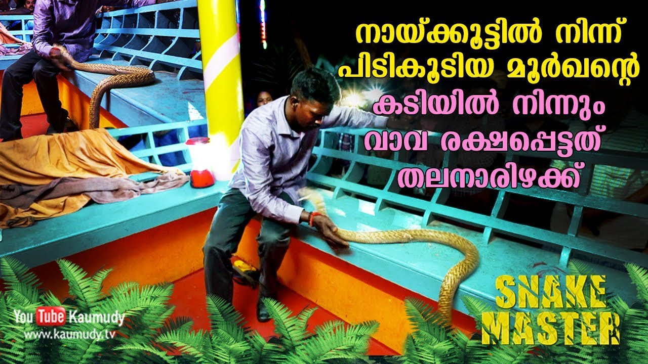 OMG! Vava Suresh marginally escapes from a Cobra