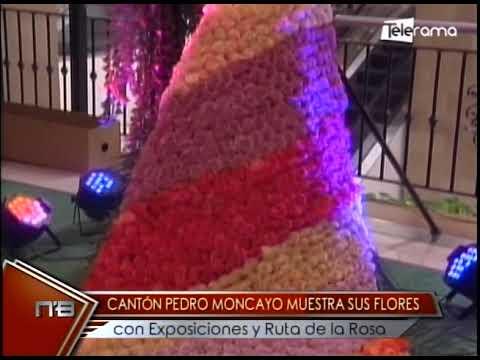 Cantón Pedro Moncayo muestra sus flores con exposiciones y Ruta de la Rosa