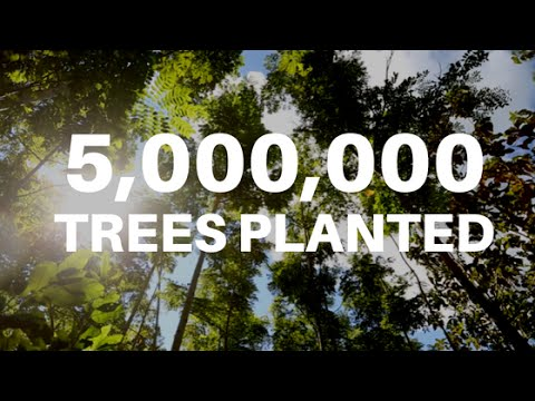Ecosia Has Reached 5 Million Planted Trees