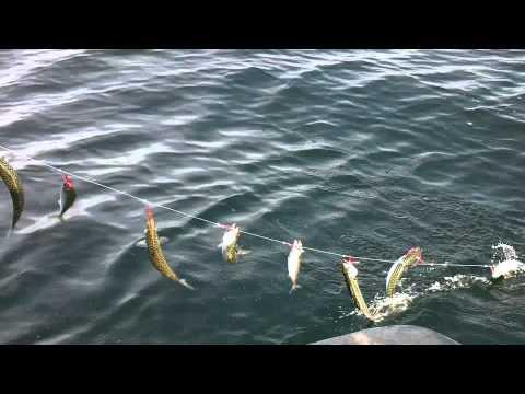 SCH61 Jiggen op makreel