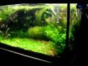 Aqui vai o video que registra o 5º mês de funcionamento do meu segundo aquario plantado. Agradeço o envio de sugestões e criticas.