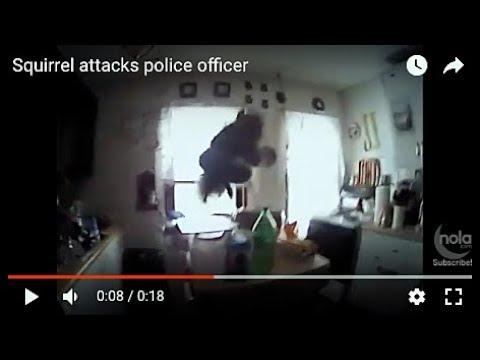 Бесстрашная белка испугала полицейского