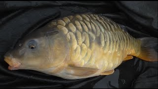 Episode 132 - Carp Match at The Islands Fishery March 2015