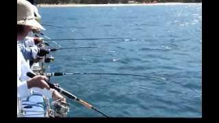 Pescaria de Lula