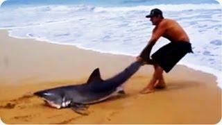 Odważny facet ratuje rekina na plaży…