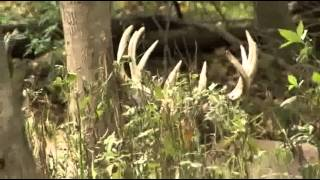 More bucks bite the dust at World Class Whitetails of Ohio