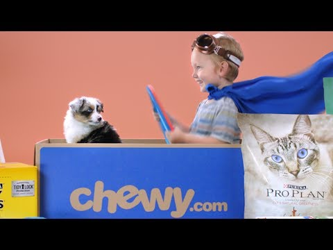 Chewy.com summer spots1