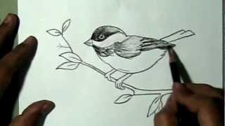 How to draw a beautiful sparrow sitting on branch Drawing Drawing