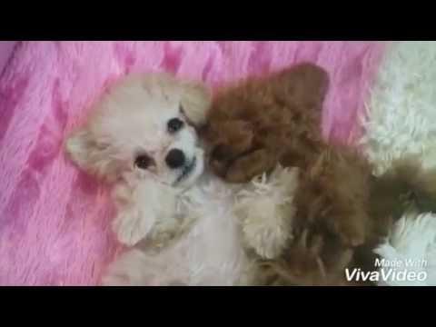 Teddy SHU - Part1 (видео)